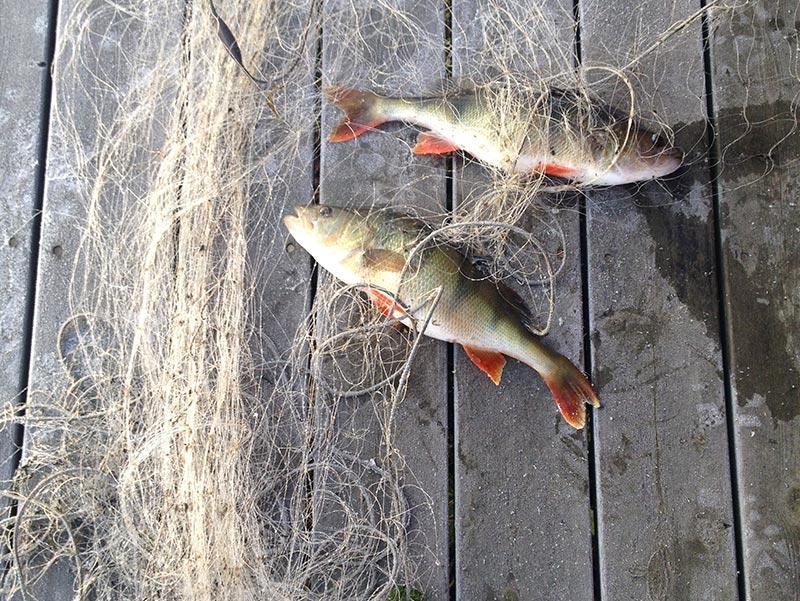 fiske1